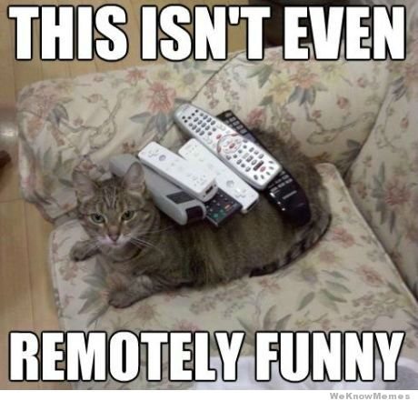 remotely-funny-cat