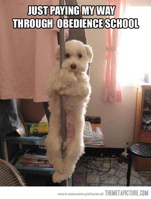 funny-dog-dancing-pole