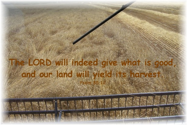 harvest_view_with_scripture