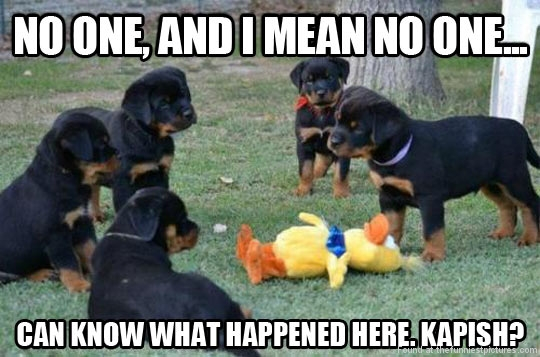funny-dogs-duck-murder